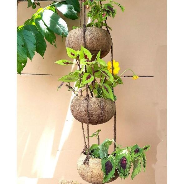 Chậu trồng cây từ vỏ dừa, gáo dừa