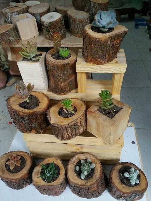 Tận dụng thân cây gỗ để làm chậu trồng cây