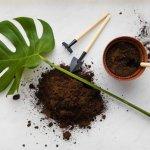 Top 5 lớp giá thể hữu cơ ủ gốc và che phủ bề mặt chậu giữ ẩm cho cây tốt nhất
