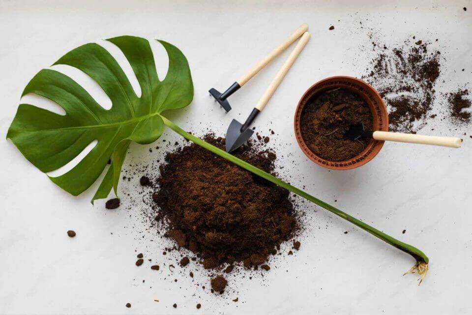 Giá thể trồng cây