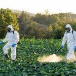Một số lưu ý khi sử dụng thuốc bảo vệ thực vật
