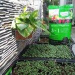 Đất sạch Orgamix 3 in 1 Natural Potting Soil có thật sự tốt không?