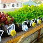 Tận dụng chai nhựa trồng rau cho khu vườn đẹp mắt