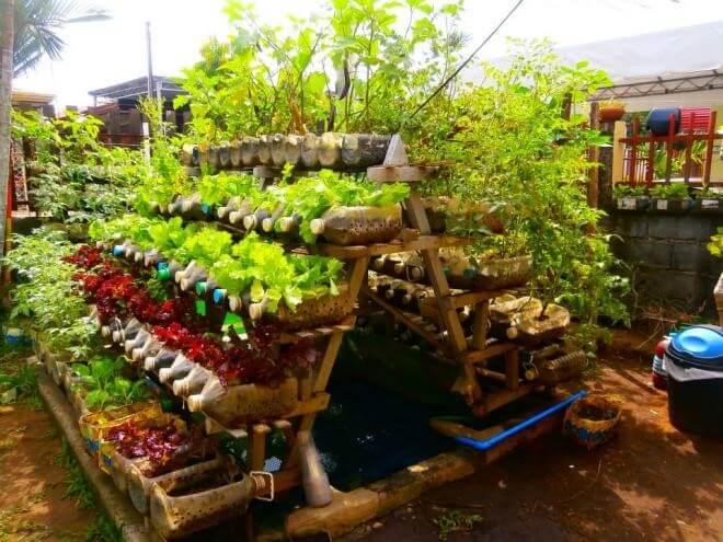 Trang trí chai nhựa trồng rau theo tầng đẹp mắt