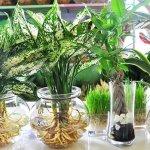 Những loại cây lá màu trồng thủy canh trong văn phòng và cách chăm sóc
